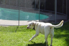 pet-safe-pool-diy-fence