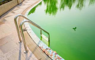 algea-in-the-swimming-pool-diy-pool-fence