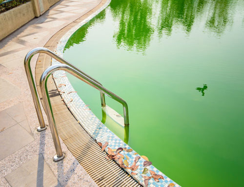Algea In The Swimming Pool?