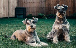 Is Chlorine Hazardous For Your Dog